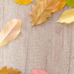 『まいにち漢方』に学ぶ、秋の養生